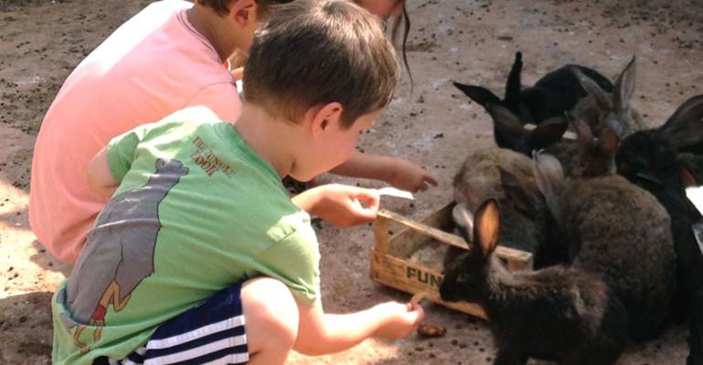 LA MASSERIA: VISITA DEGLI ANIMALI DELLA FATTORIA
