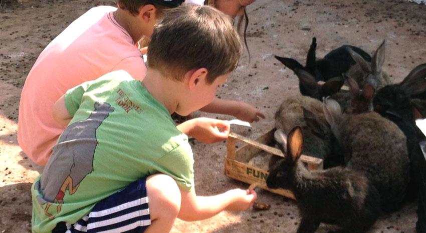 Visita di istruzione in masseria visita degli animali for Grandi planimetrie della fattoria